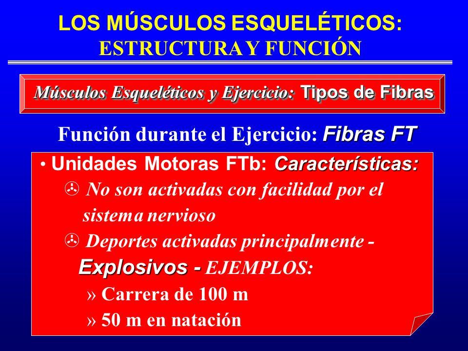 Función durante el Ejercicio: Fibras FT