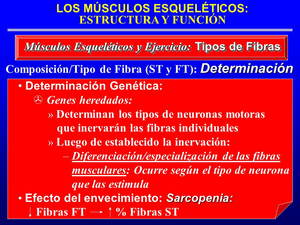 Composición/Tipo de Fibra (ST y FT): Determinación