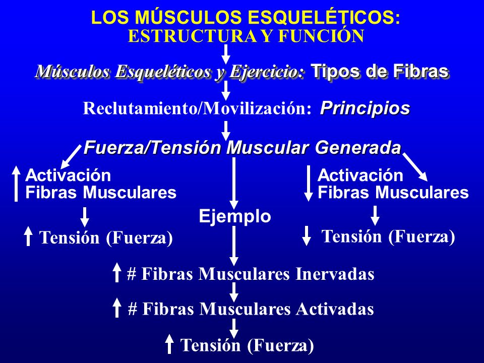 # Fibras Musculares Inervadas