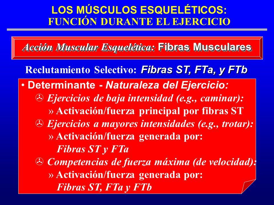 Reclutamiento Selectivo: Fibras ST, FTa, y FTb