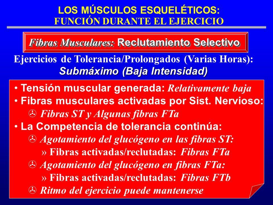 Ejercicios de Tolerancia/Prolongados (Varias Horas):