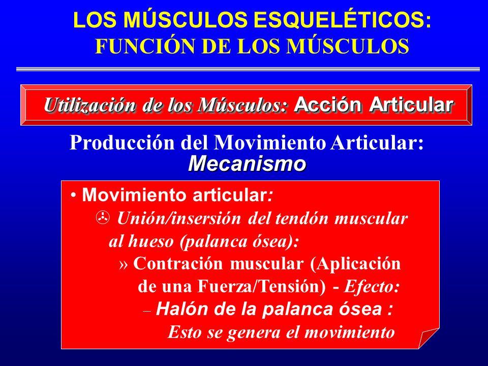 Producción del Movimiento Articular: