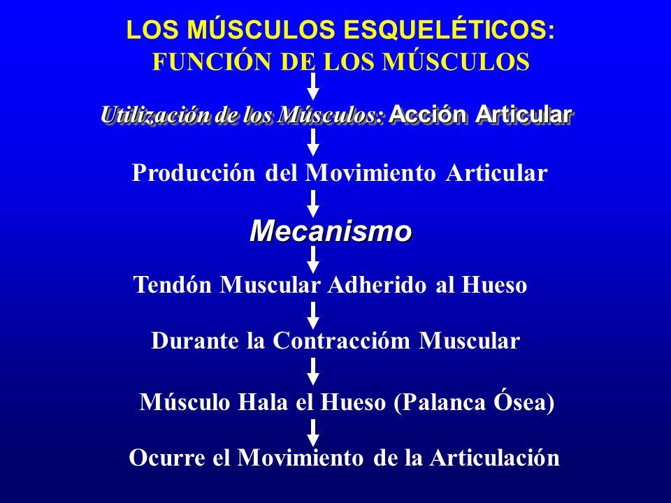 Producción del Movimiento Articular