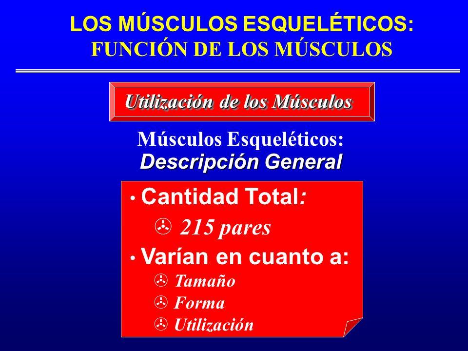 215 pares Músculos Esqueléticos: