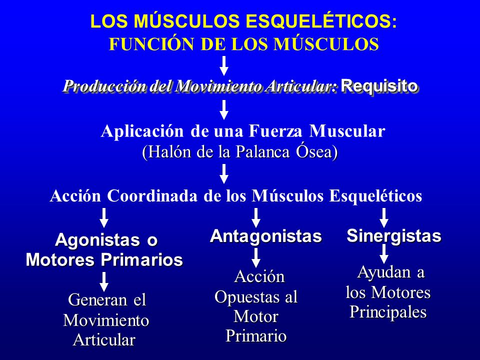 Aplicación de una Fuerza Muscular