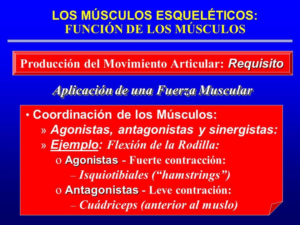 Producción del Movimiento Articular: Requisito