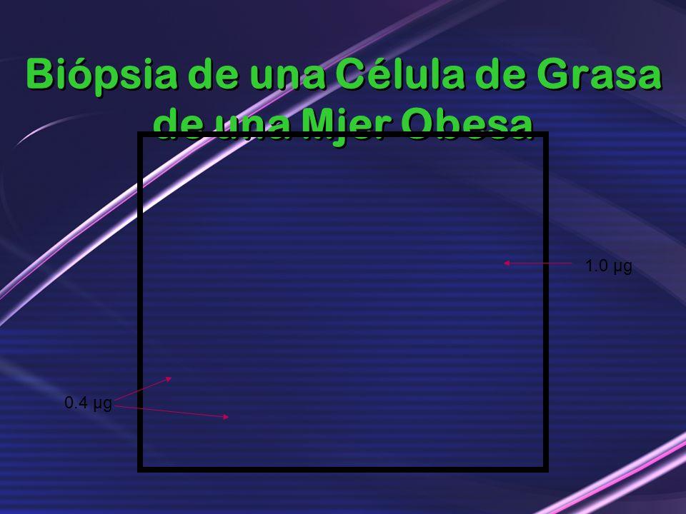 Biópsia de una Célula de Grasa de una Mjer Obesa