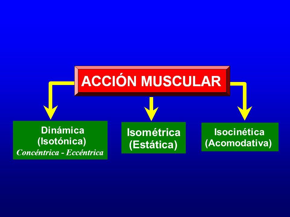 Isométrica (Estática) Dinámica Isocinética (Isotónica) (Acomodativa)