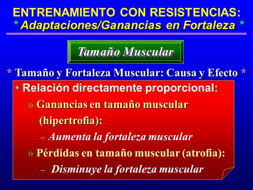 * Tamaño y Fortaleza Muscular: Causa y Efecto *