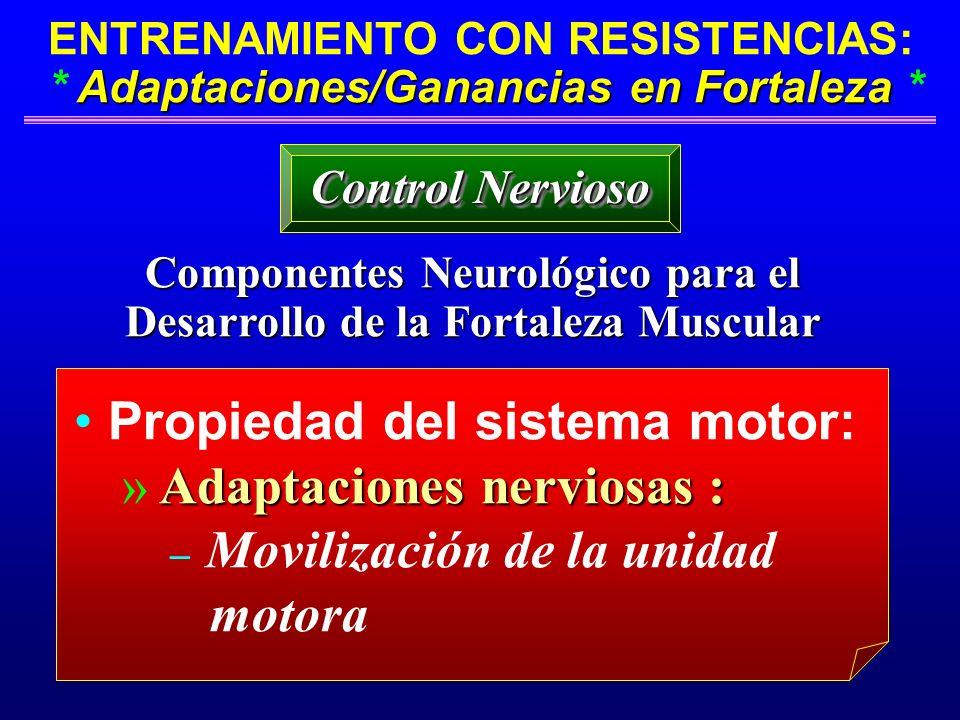 Componentes Neurológico para el Desarrollo de la Fortaleza Muscular