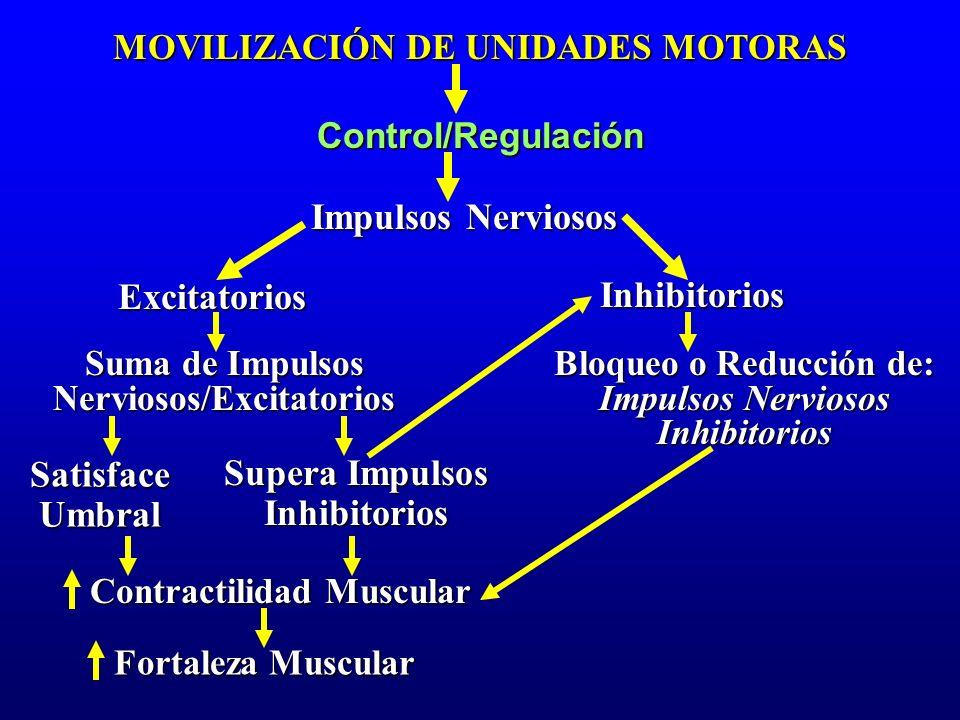 Impulsos Nerviosos Excitatorios Inhibitorios Satisface Umbral