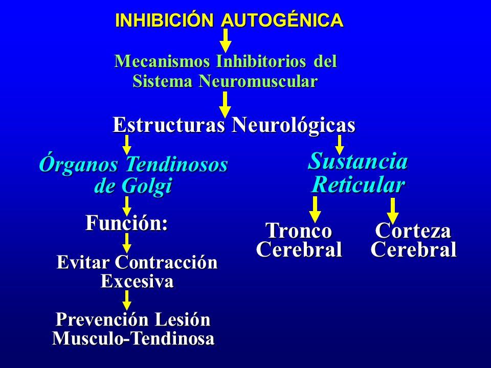 Sustancia Reticular Estructuras Neurológicas Órganos Tendinosos
