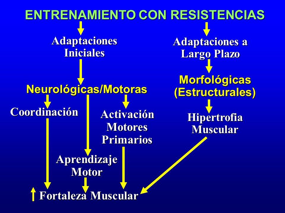 ENTRENAMIENTO CON RESISTENCIAS