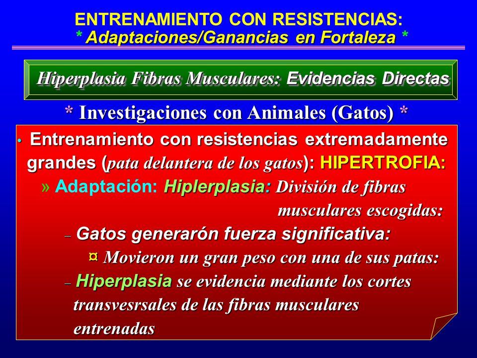 * Investigaciones con Animales (Gatos) *