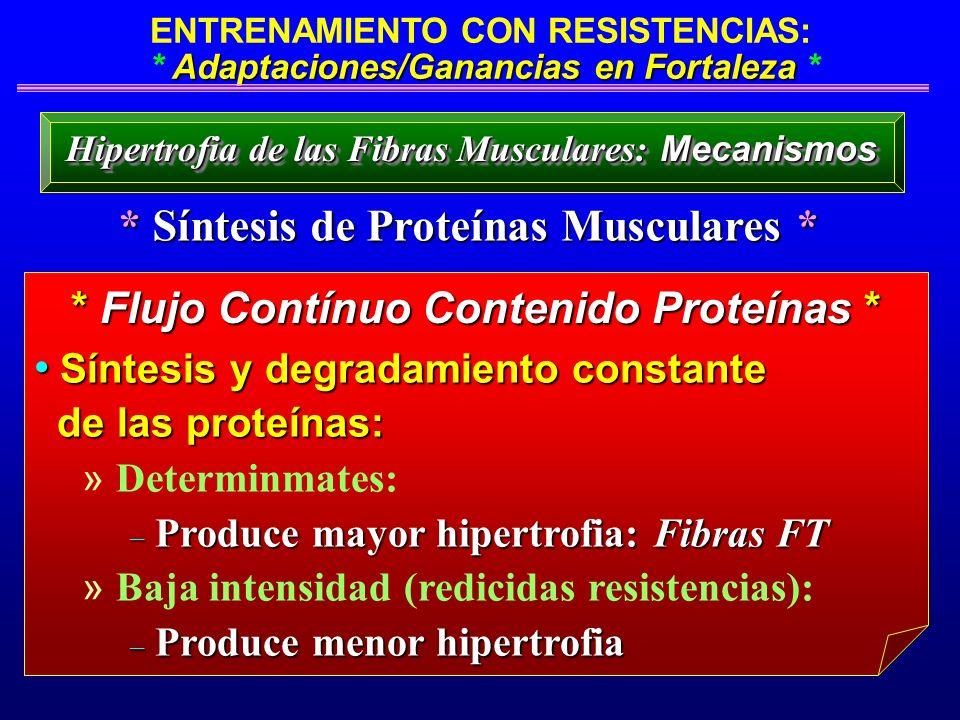 * Síntesis de Proteínas Musculares *