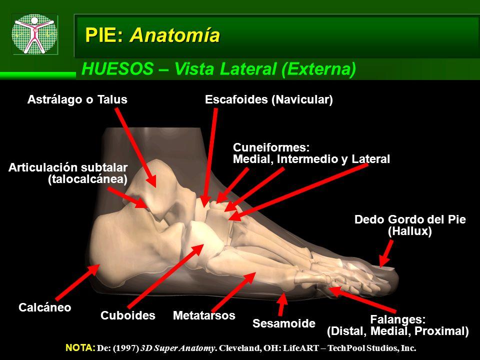 Dedo Gordo del Pie (Hallux) (Distal, Medial, Proximal)