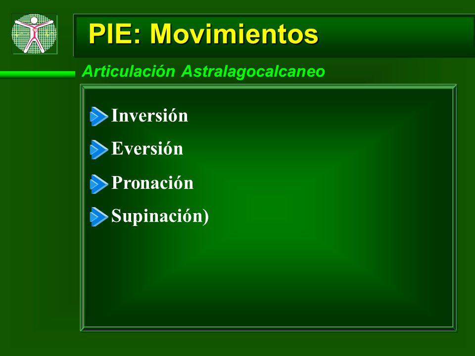 PIE: Movimientos Inversión Eversión Pronación Supinación)