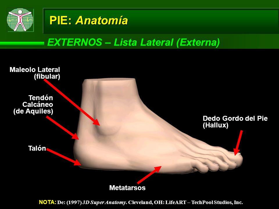 PIE: Anatomía EXTERNOS – Lista Lateral (Externa)