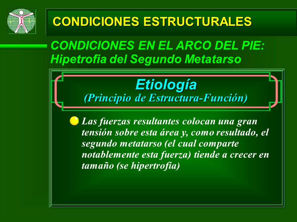 (Principio de Estructura-Función)