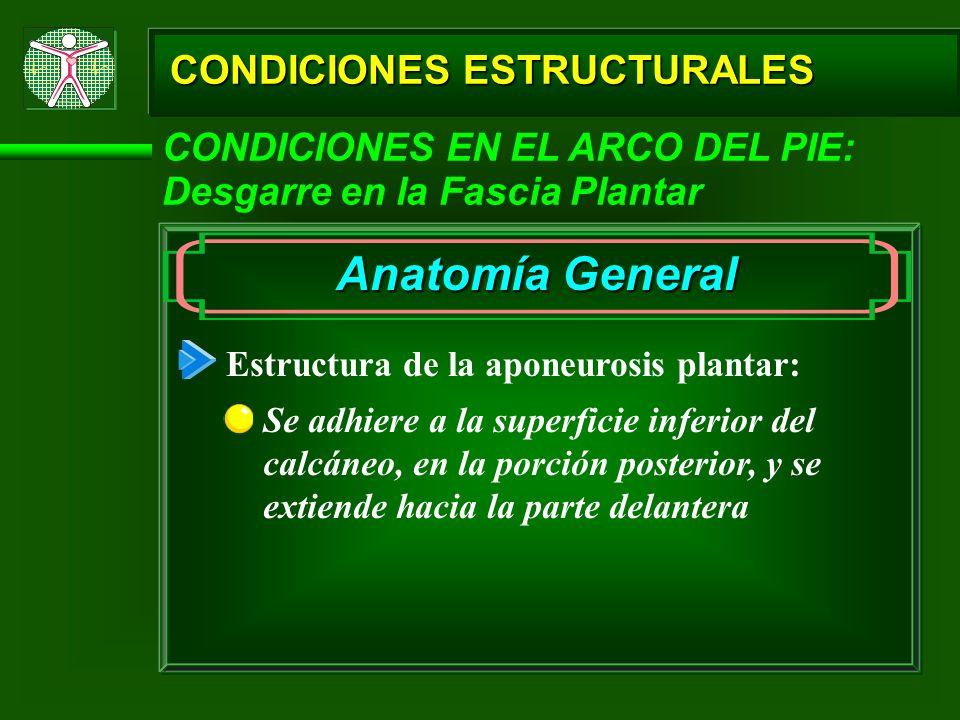 Anatomía General CONDICIONES ESTRUCTURALES