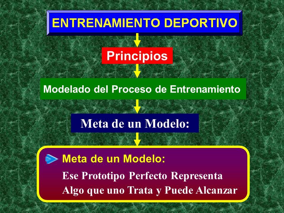 Principios Meta de un Modelo: Meta de un Modelo: