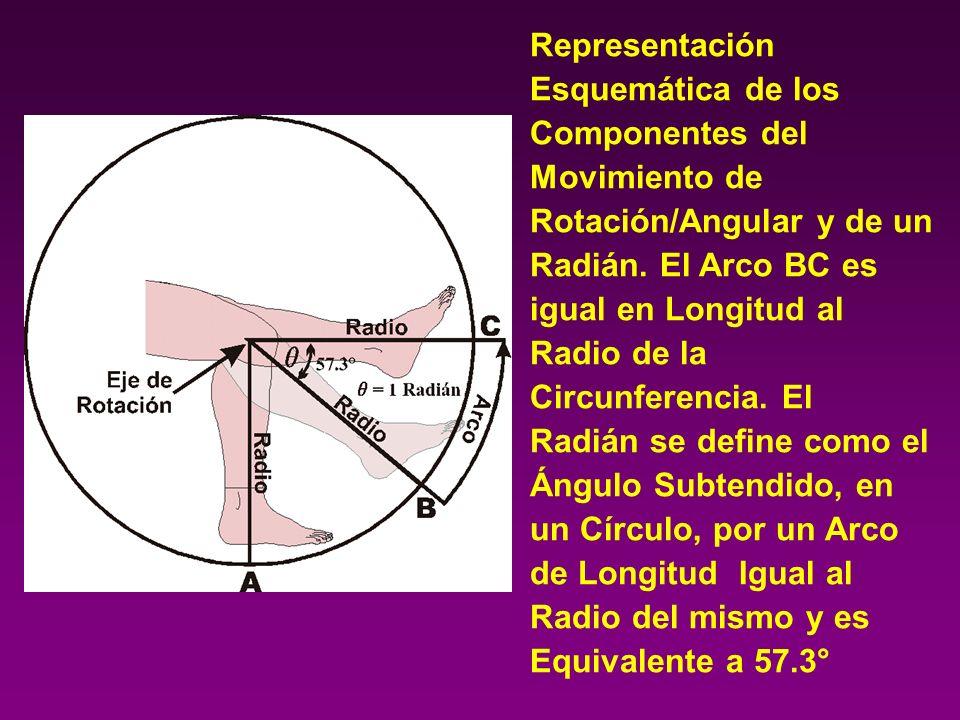 Representación Esquemática de los Componentes del