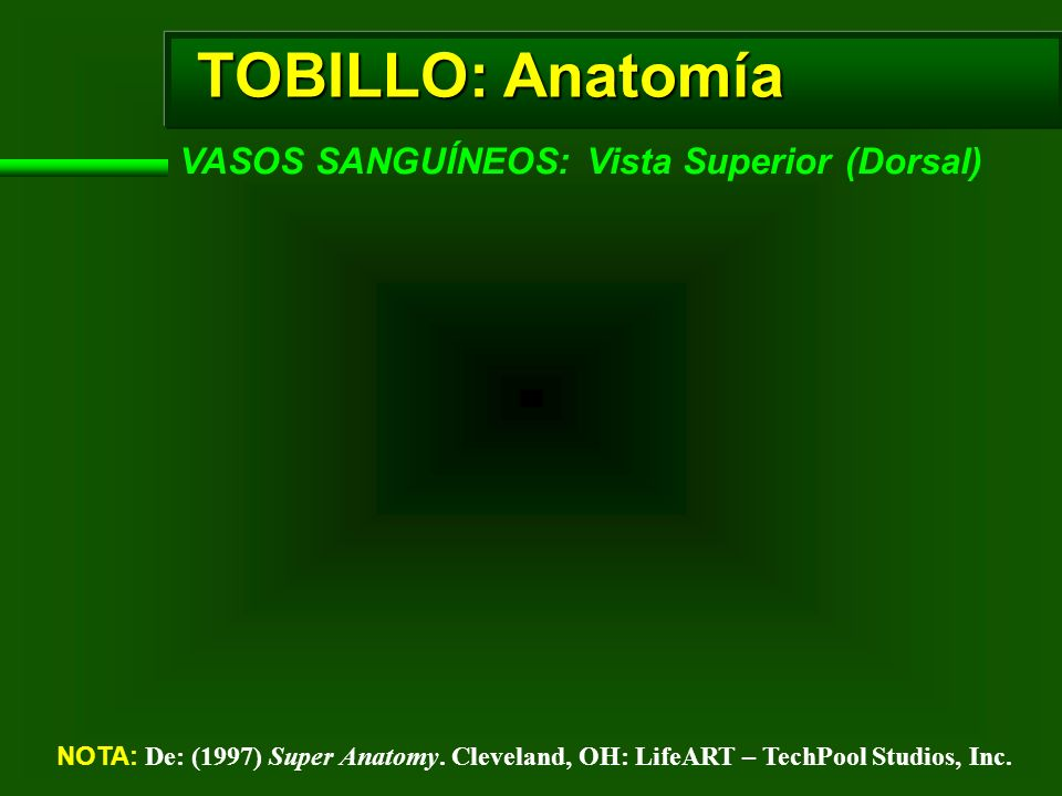 TOBILLO: Anatomía VASOS SANGUÍNEOS: Vista Superior (Dorsal)