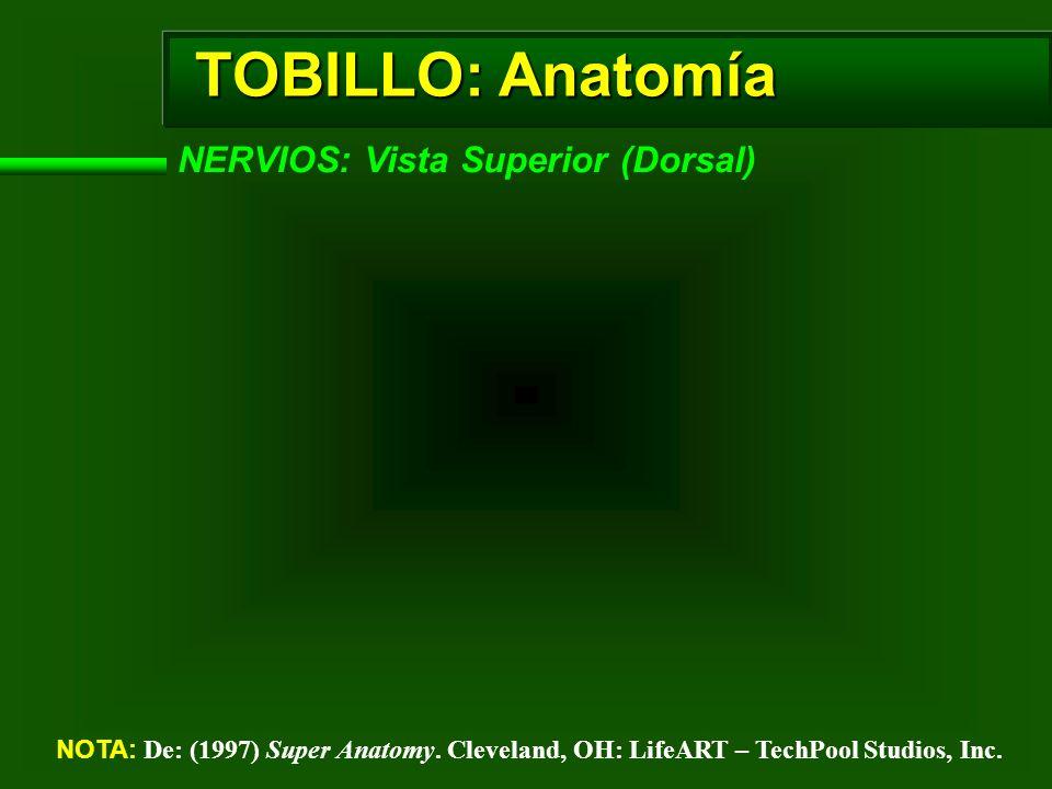 TOBILLO: Anatomía NERVIOS: Vista Superior (Dorsal)