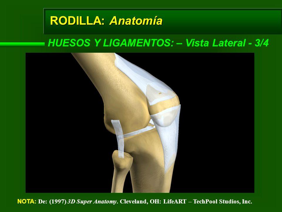 RODILLA: Anatomía HUESOS Y LIGAMENTOS: – Vista Lateral - 3/4