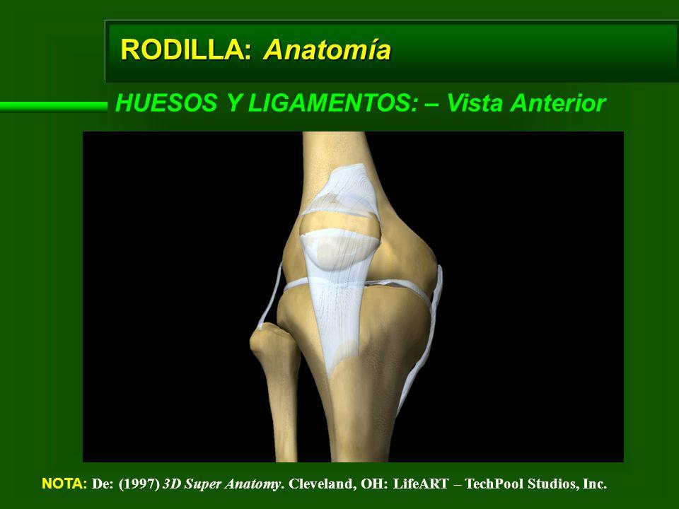 RODILLA: Anatomía HUESOS Y LIGAMENTOS: – Vista Anterior