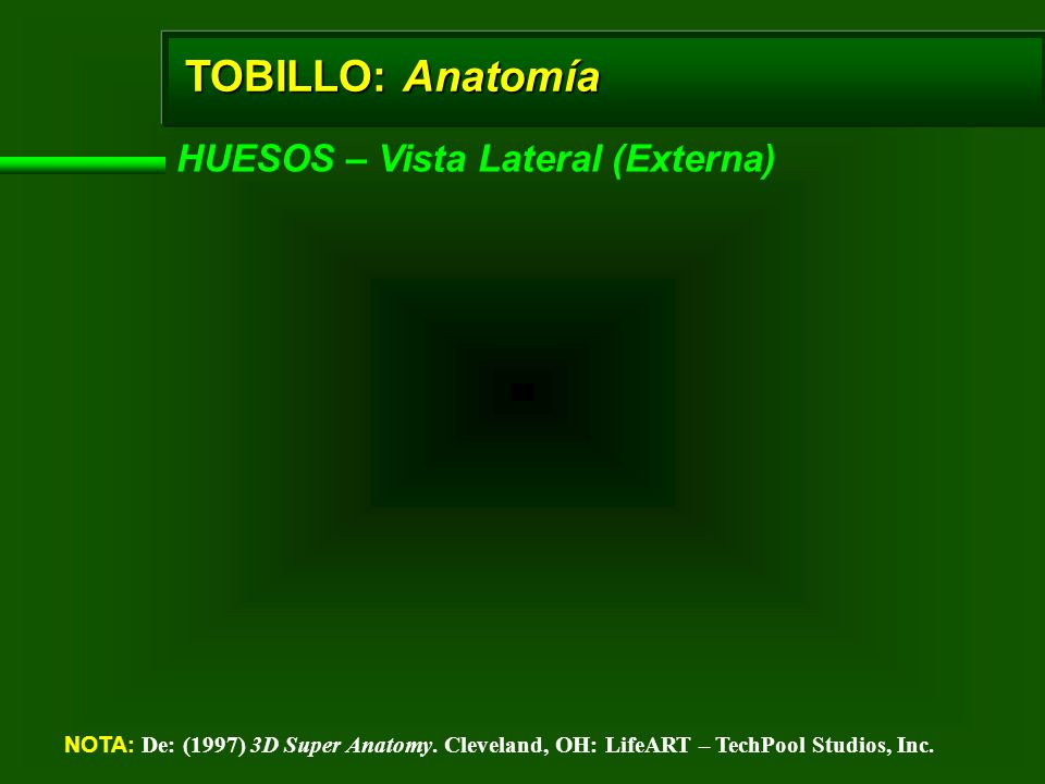 TOBILLO: Anatomía HUESOS – Vista Lateral (Externa)