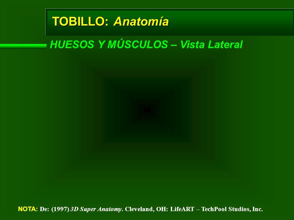 TOBILLO: Anatomía HUESOS Y MÚSCULOS – Vista Lateral