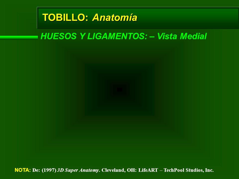 TOBILLO: Anatomía HUESOS Y LIGAMENTOS: – Vista Medial