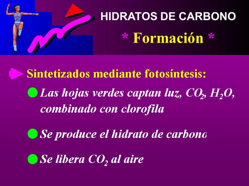 HIDRATOS DE CARBONO * Formación *