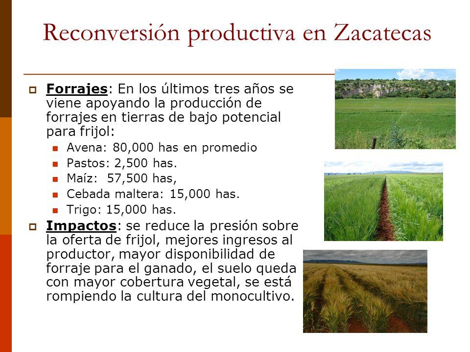 Reconversión productiva en Zacatecas