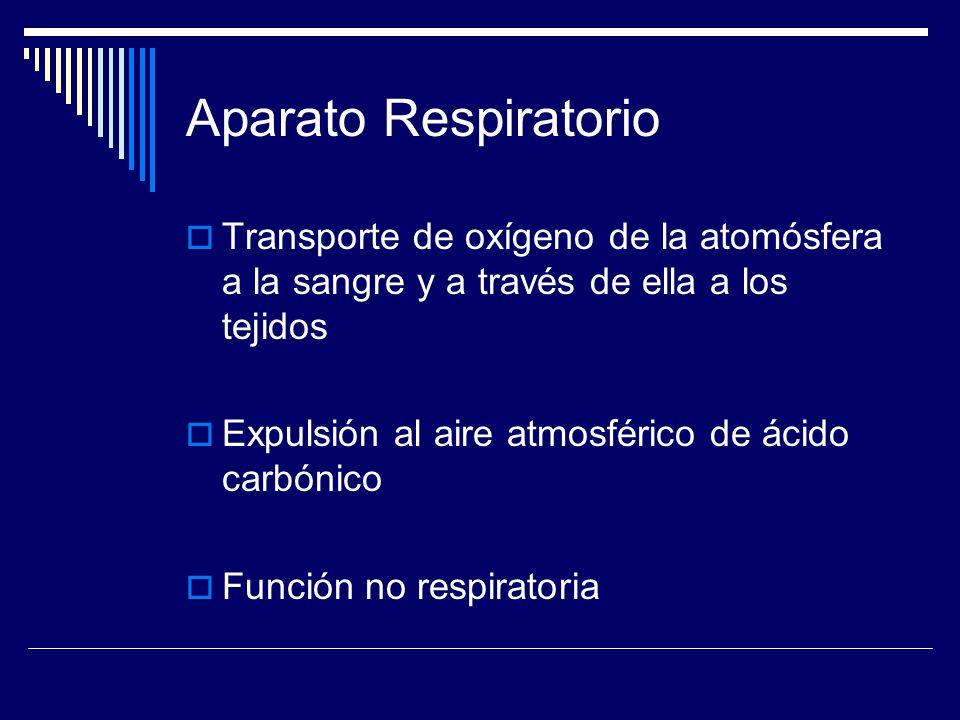 Aparato Respiratorio Transporte de oxígeno de la atomósfera a la sangre y a través de ella a los tejidos.