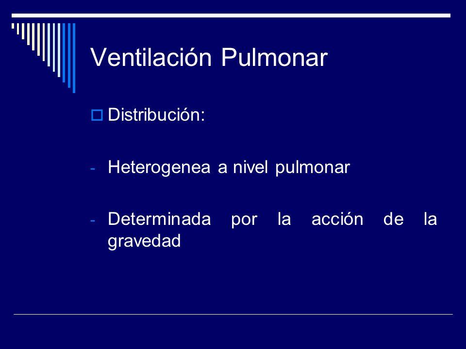 Ventilación Pulmonar Distribución: Heterogenea a nivel pulmonar