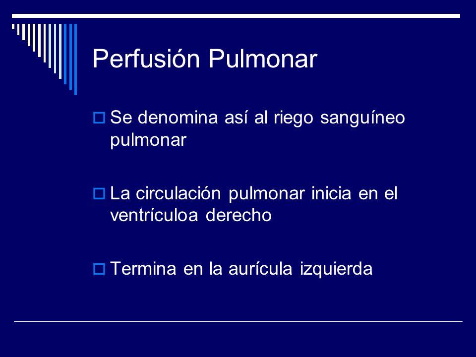 Perfusión Pulmonar Se denomina así al riego sanguíneo pulmonar