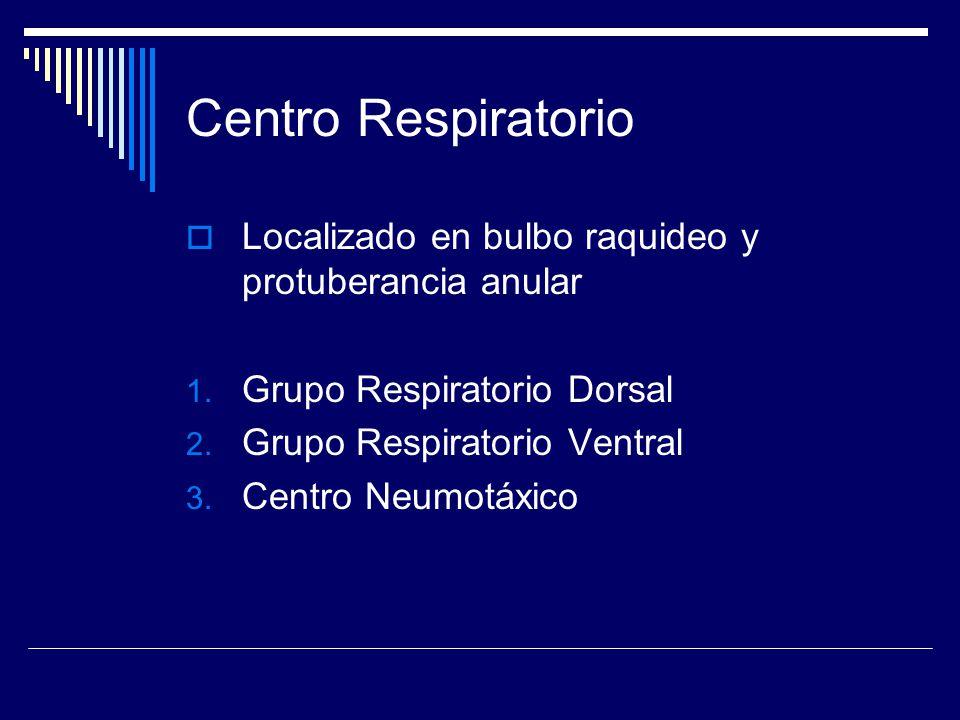 Centro Respiratorio Localizado en bulbo raquideo y protuberancia anular. Grupo Respiratorio Dorsal.