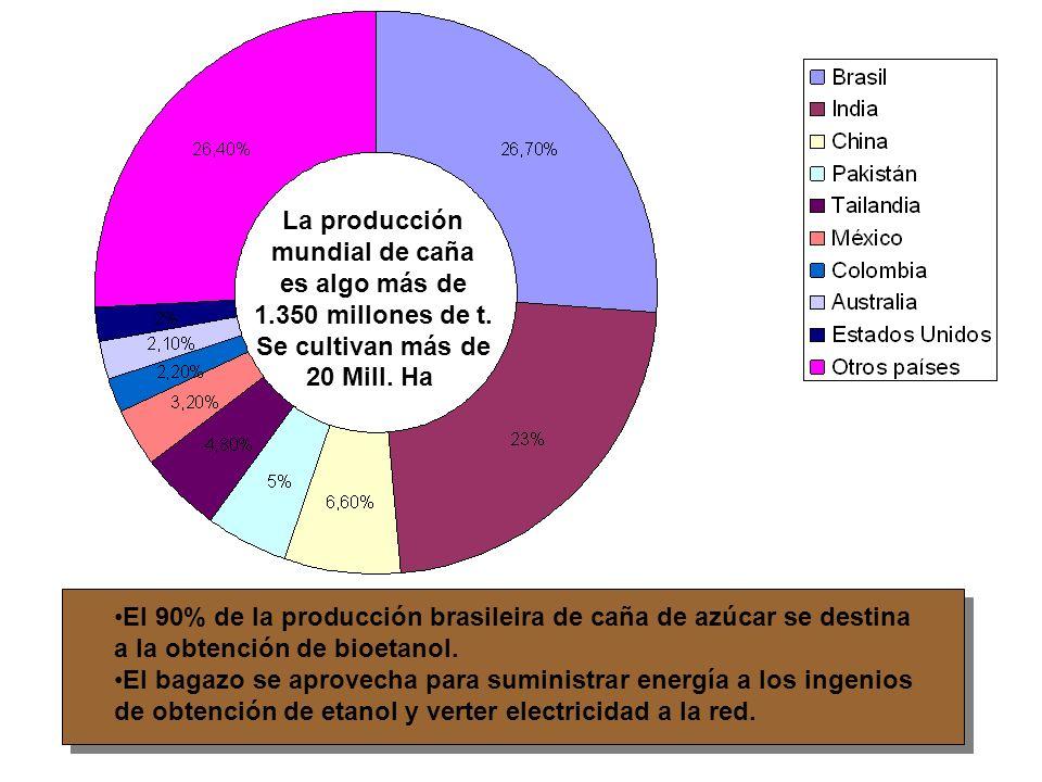 La producción mundial de caña. es algo más de. 1.350 millones de t. Se cultivan más de. 20 Mill. Ha.