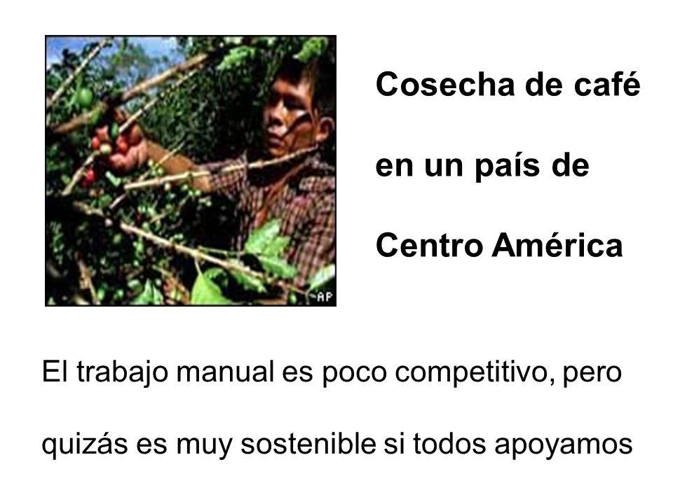Cosecha de café en un país de Centro América
