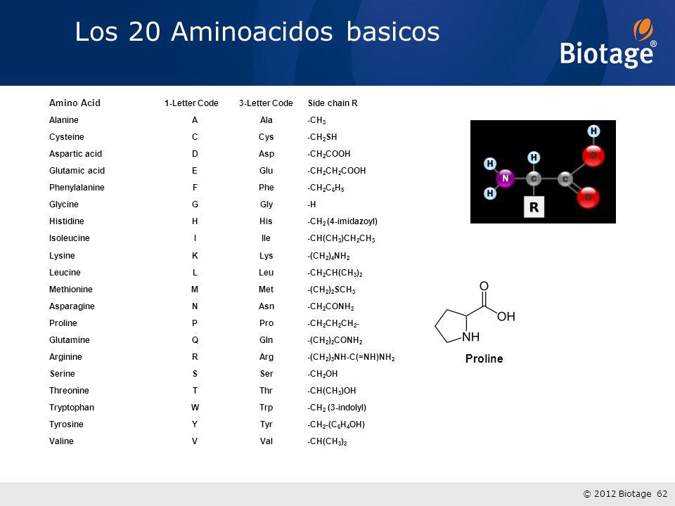Los 20 Aminoacidos basicos