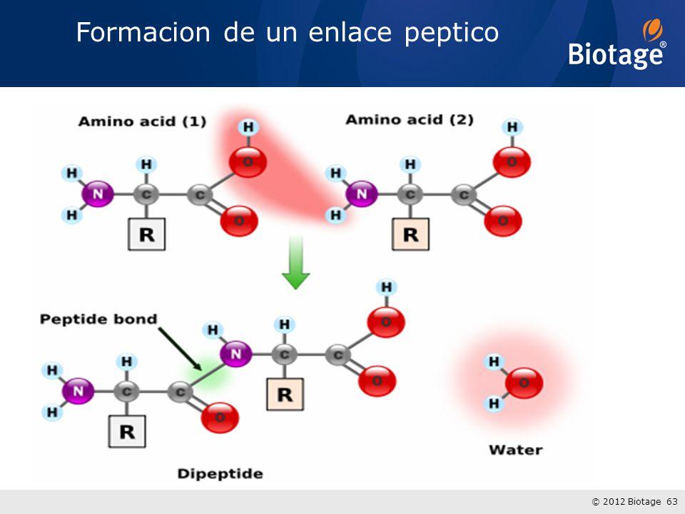 Formacion de un enlace peptico