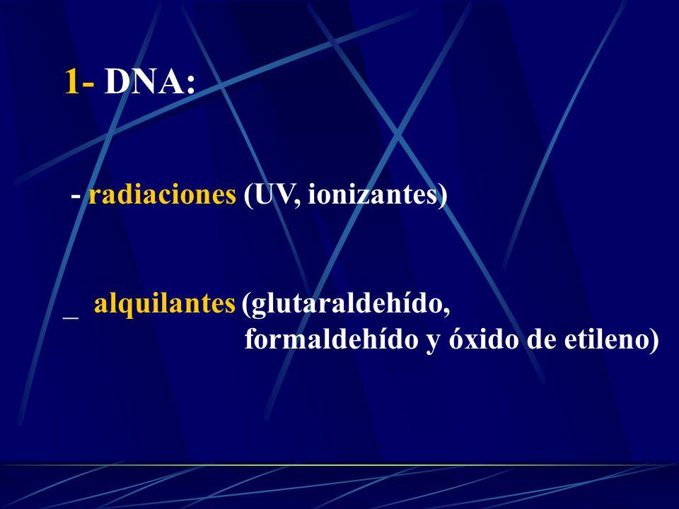1- DNA: - radiaciones (UV, ionizantes) _ alquilantes (glutaraldehído,