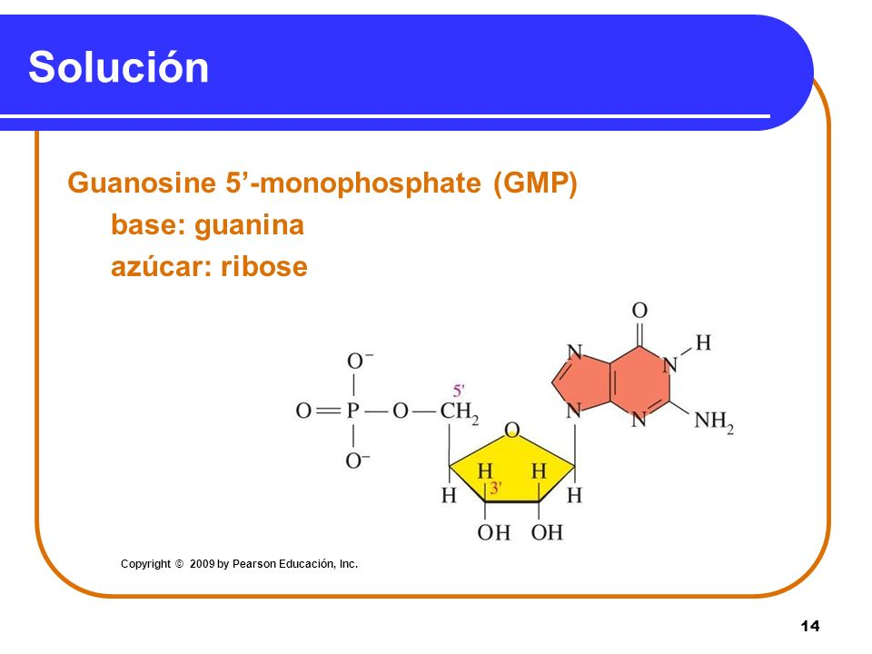 Solución Guanosine 5'-monophosphate (GMP) base: guanina azúcar: ribose