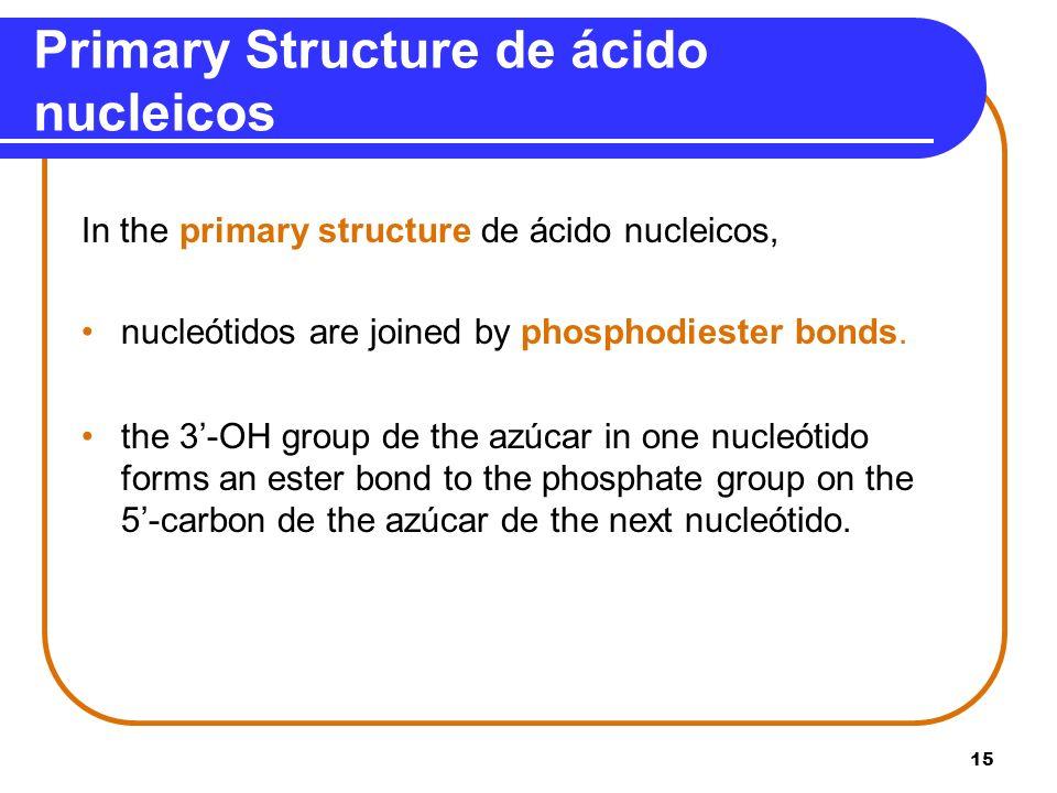 Primary Structure de ácido nucleicos