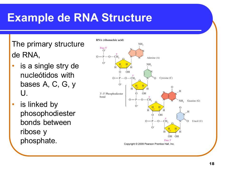 Example de RNA Structure