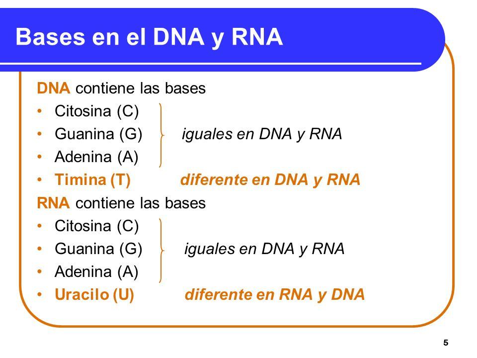 Bases en el DNA y RNA DNA contiene las bases Citosina (C)