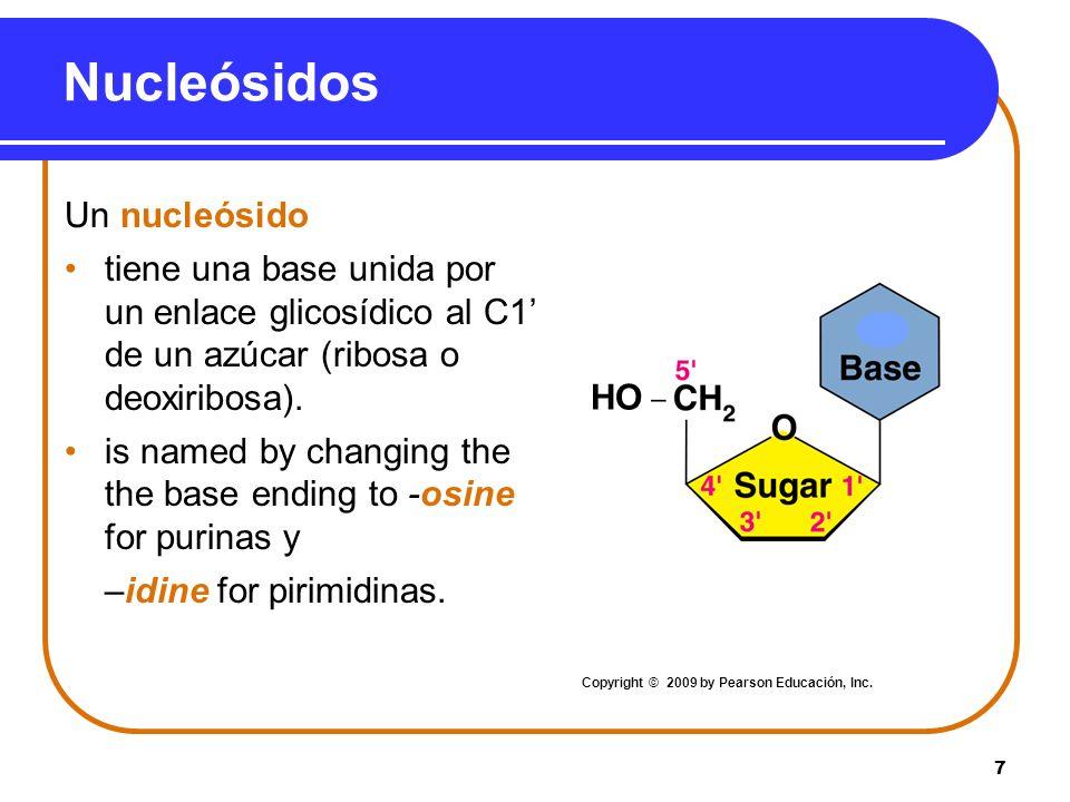Nucleósidos Un nucleósido
