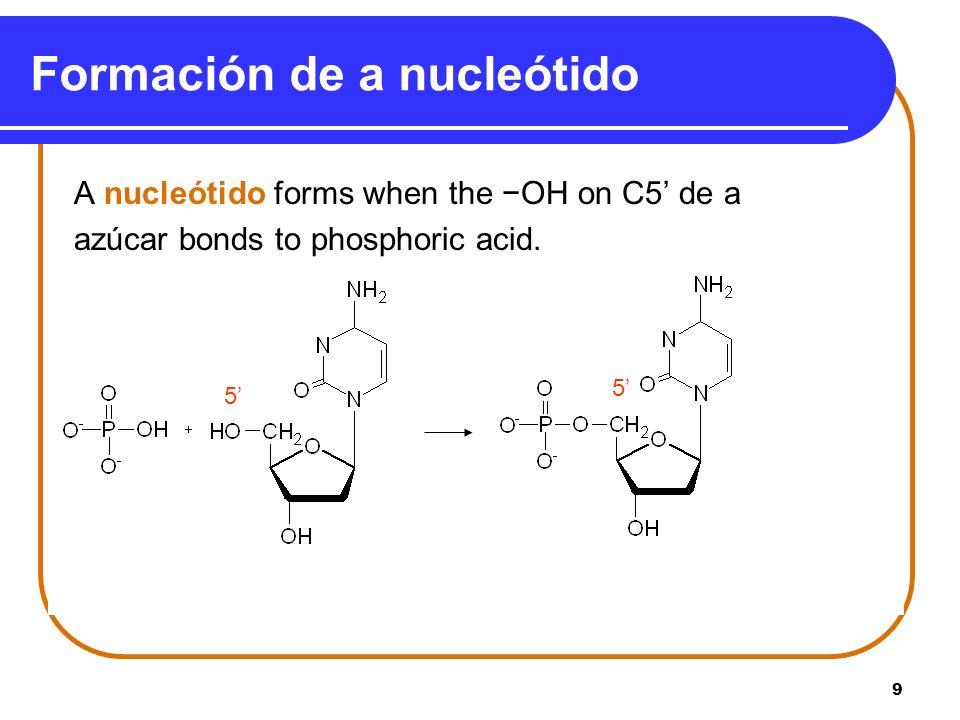 Formación de a nucleótido